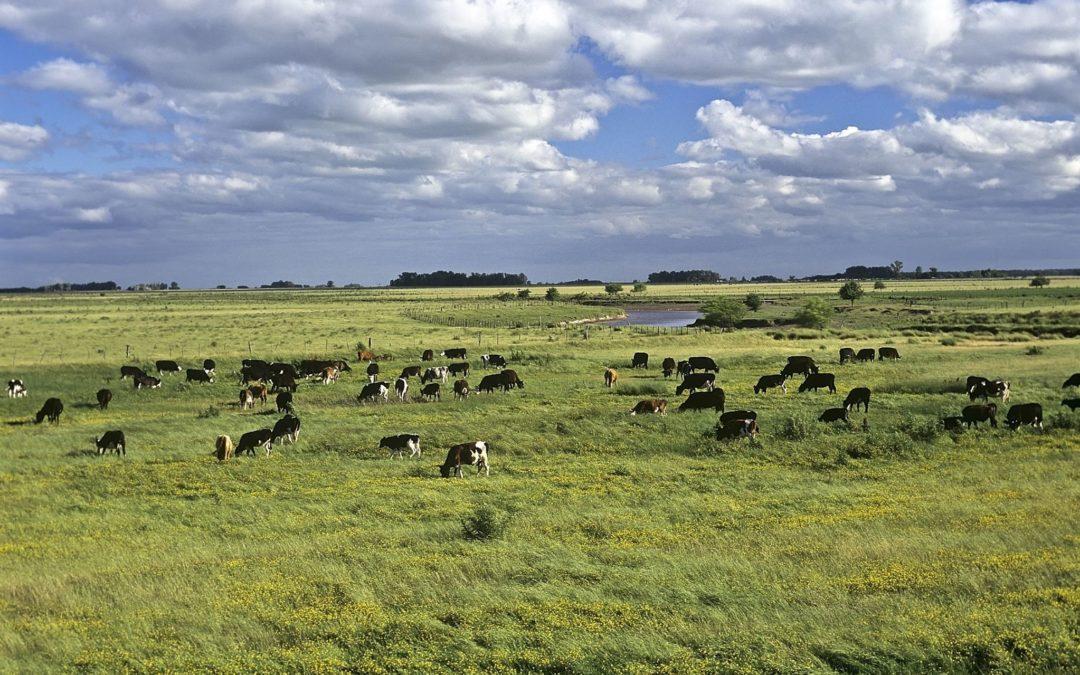 Mercosur: pas trop sûr…